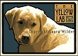 Yellow Lab Print LWDPYL